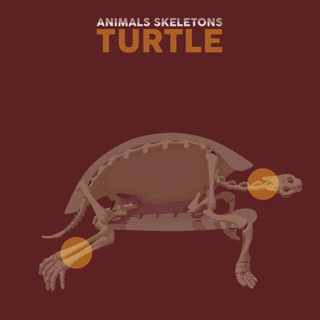 Turtle Animals Skeletons