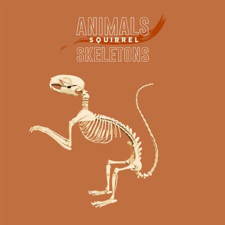 Squirrel Animals Skeletons orange Vektoros illusztráció