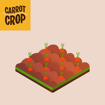 Home crop carrot in white background food health icon- Vector