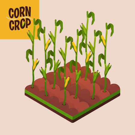 Home crop corn in white background food health icon- Vector