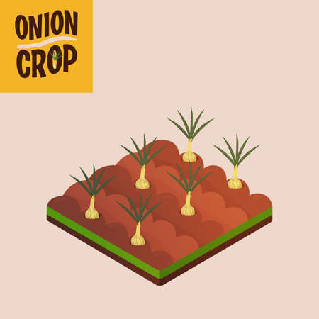 Home crop onion in white background food health icon- Vector