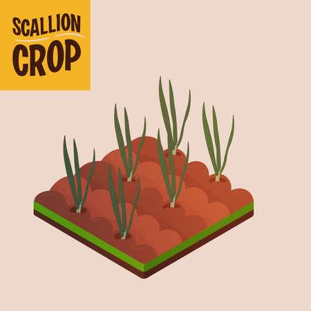 Home crop scalliom in white background food health icon- Vector 向量圖像