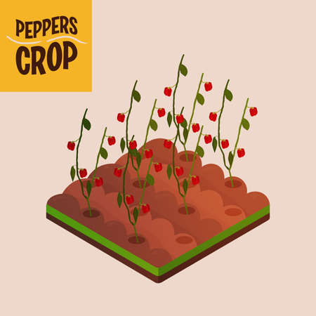 Home crop peppers in white background food health icon- Vector 向量圖像