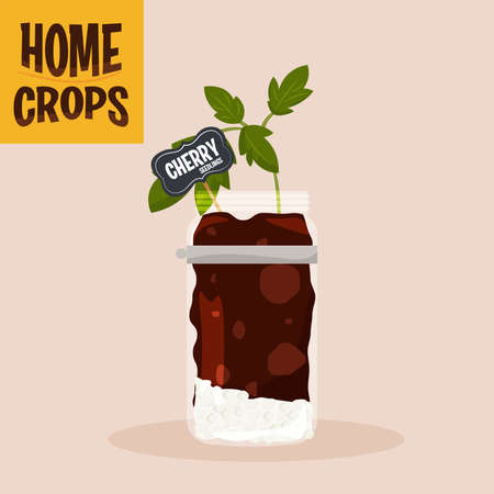 Home crop peppers in germinate food health icon- Vector
