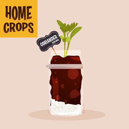 Home crop spinach in germinate food health icon- Vector 向量圖像