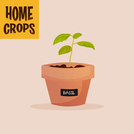 Home crop corn in flowerpot food health icon- Vector 向量圖像