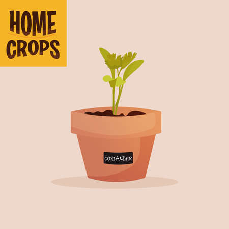 Home crop spinach in flowerpot food health icon- Vector