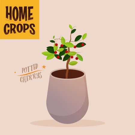 Home crop peppers in white flowerpot food health icon- Vector