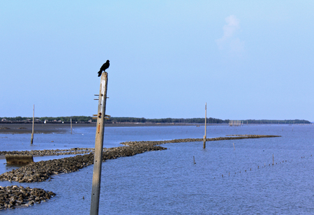 coastal erosion: Lonely Crow - Lonely crow is standing on electric pole in the sea due to Coastal erosion