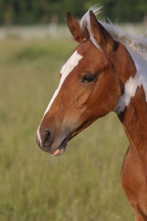 filly: Head of painted filly Stock Photo