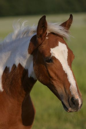 filly: Head of filly
