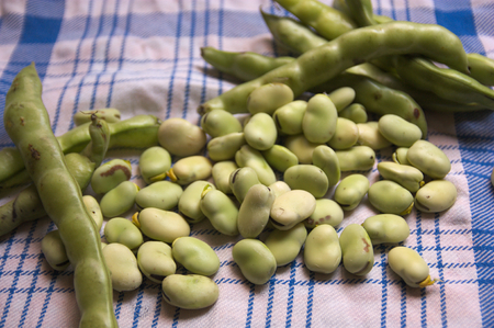 Some beans with their pods on a blue and white checkered table Stock Photo