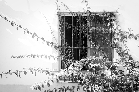 Barred window in an abandoned house with branches of the bougainvillea climbing plant around it 免版税图像