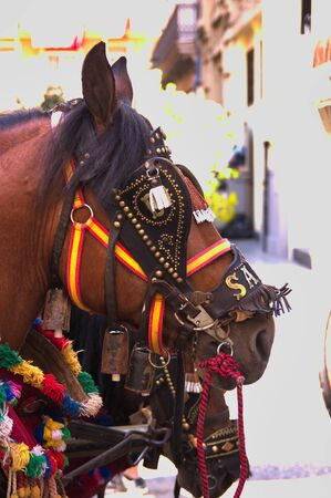 A horse adorned with his reins of gala for a procession or a traditional festival in Valencia, Spain