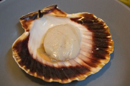 A scallop on its lower leaflet that is wavy. The type of bivalve molluscs, closely related to clams and oysters