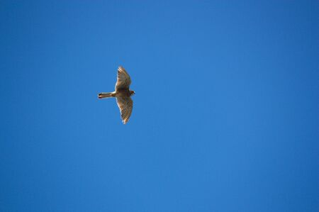 A bird of prey crosses the blue sky leaving space to add texts or graphics to its right.