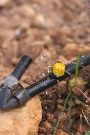 Close-up of a drip rubber with its sprinkler watering small doses of water to the crop 스톡 콘텐츠