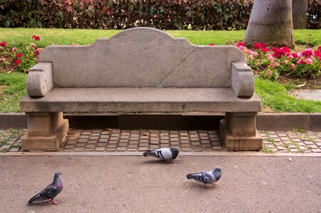 Stone bench to sit in a park with some pigeons around looking for food Фото со стока