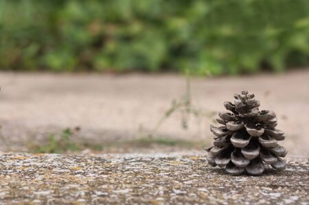 A pine cones to the right of the image, leaving room to add text or graphics through the background out of focus in green vegetable color. Christmas background. Copy space