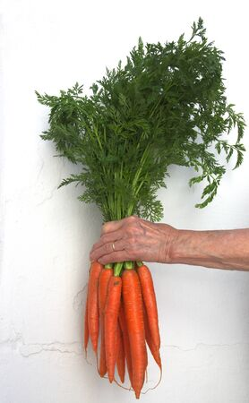 An adult woman holds in a hand a bouquet of carrots with a white painted wall as a background Фото со стока