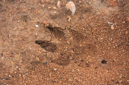 A wild animal has imprinted the imprint of one of its legs in the humid earth of the mountain