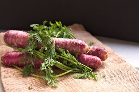 Purple carrots wrapped with carrot branches on a sack of natural brown burlap cloth. Dark background with natural window light