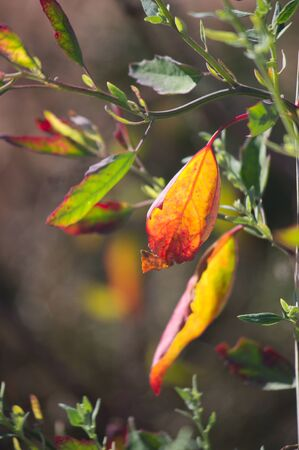 Close-up of orange leaves in which the sun gives them backlight. Center space to add texts, copy space