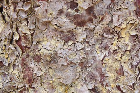 Texture of the bark of a tree that has several colors from white to yellow through the ocher