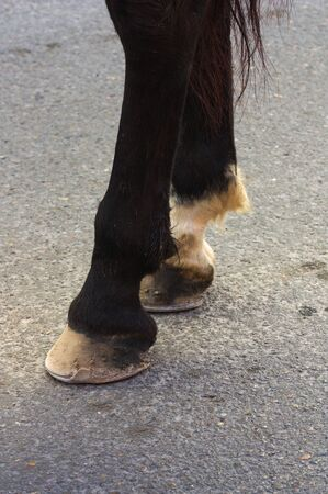 Close-up of the legs of a horse that is walking through a paved area of the city
