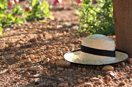 Image of a hat left next to a tree trunk that provides shade in a crop field. With space for texts, copy space Stok Fotoğraf