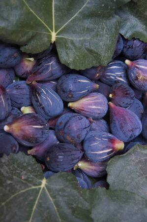 Image of some mature dark figs with some fig leaves around them