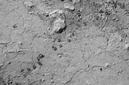Black and white image of the stone floor in which ants follow a diagonal path on the rough surface of a rural road