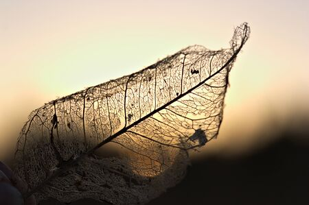 Someone is holding a dry leaf that backlit shows that only the leafs natural rib remains