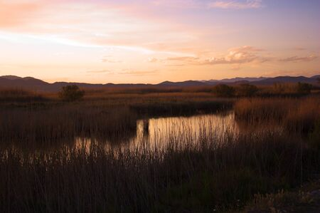 "Landscape of the ""Marjal dels Moros"" at sunset. Wetland located between the municipalities of Puçol and Sagunto, province of Valencia (Spain)"
