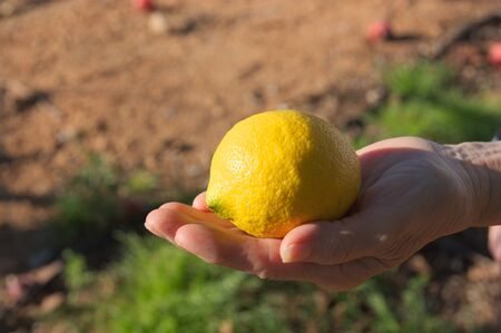A woman holds a lemon in one hand with the cultivated field soil in the background