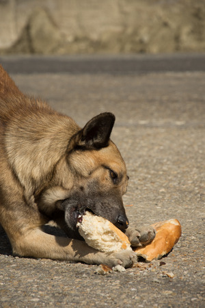 brown dog eat bread on the street