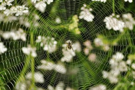symmetrical spider web Stock Photo
