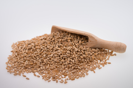 Oat Grains. Pile of grains, isolated white background