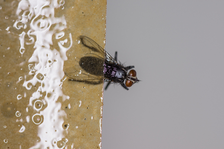 lue Trap,Mosquito Fly Killer Rolls, Sticky Fly Paper Archivio Fotografico