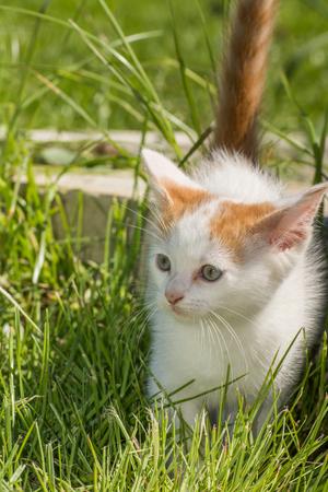 small white cat ,kitten in garden