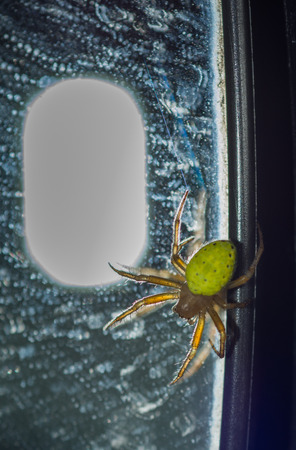 Closed up green spider on a mirror