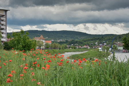 landscape with poppies in the field in Bistrita,Romania ,June,2019