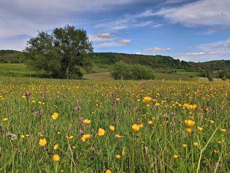 champ avec des fleurs à Bistrita Slatinita, ROUMANIE, MAI 2020