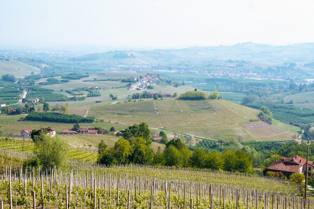 Landscape of langhe, Piedmont, Italy