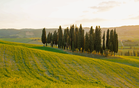 san quirico d'orcia: Landscape of tuscan countryside, Val dOrcia, Siena