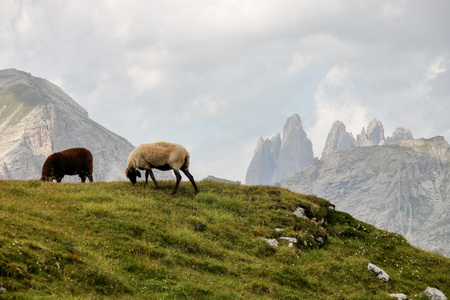 Puez odle  - Alta Badia - Landscape with a flock of sheep pasturing in Dolomites mountain in Sud Tyrol, Italy Stock Photo