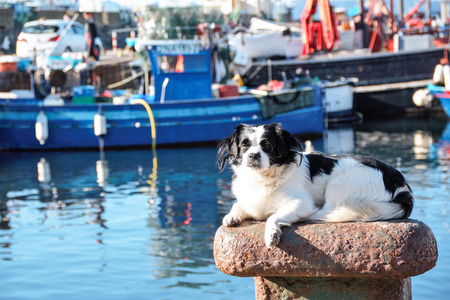 dog sunbathing on a mooring bollard in the port of Pozzuoli , Naples, Italy
