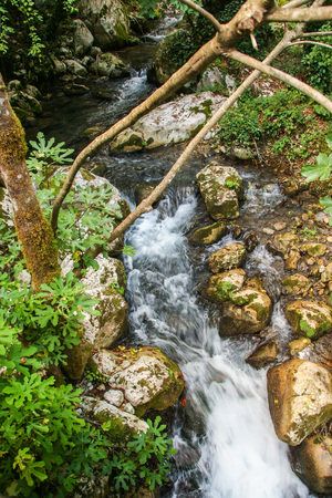 beautiful environment around the river Bussento resurgence, a natural reserve   in Cilento national park Stock Photo