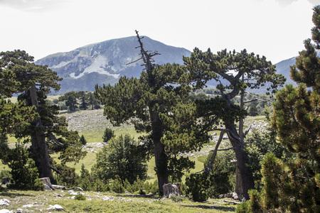 So called Garden of Gods in Pollino National park, where  the Bosnian pine, or Pinus Leucodermis lives, Basilicata , Italy Stock fotó