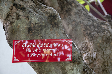 buddha quote on a Bodhi tree : read non only books but man also Archivio Fotografico - 114246635